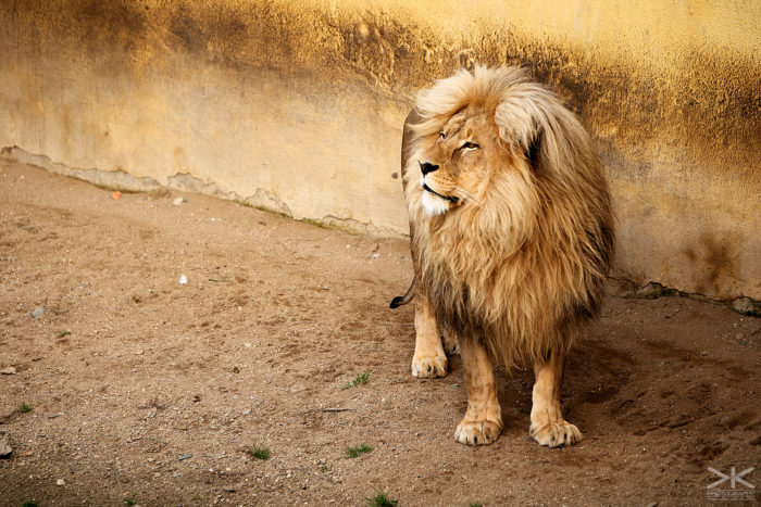 project_zoo_6860